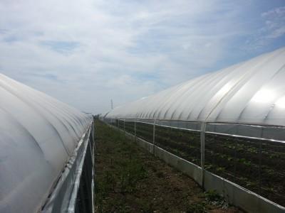 Folie solar latime 10 metri