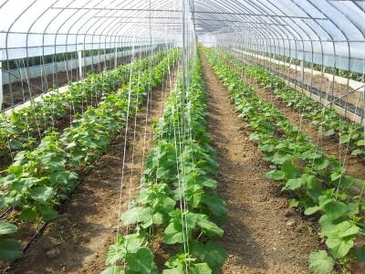 Sistemul de agatare al plantelor